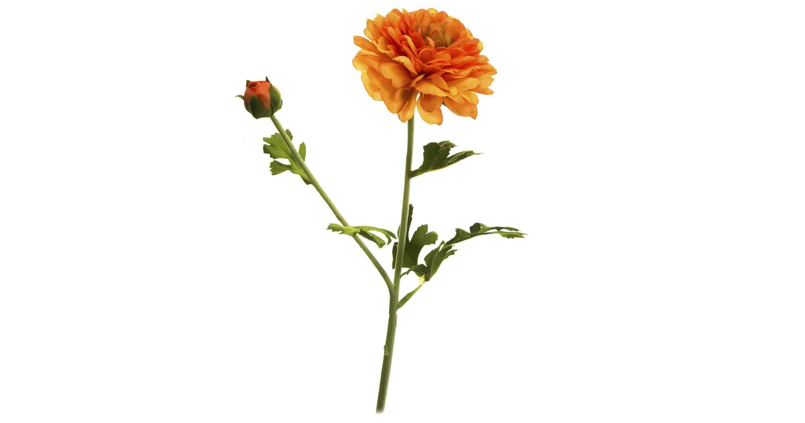 Orange flower Silk-la stunning flowers for indoor and outdoor decoration